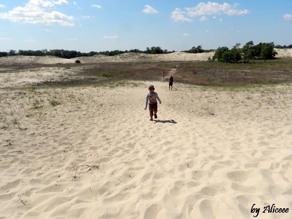 dune-de-nisip-padurea-letea-delta