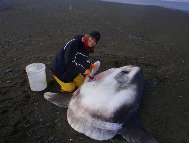 Species Of Giant Fish That Weigh Two Tonnes Were Found