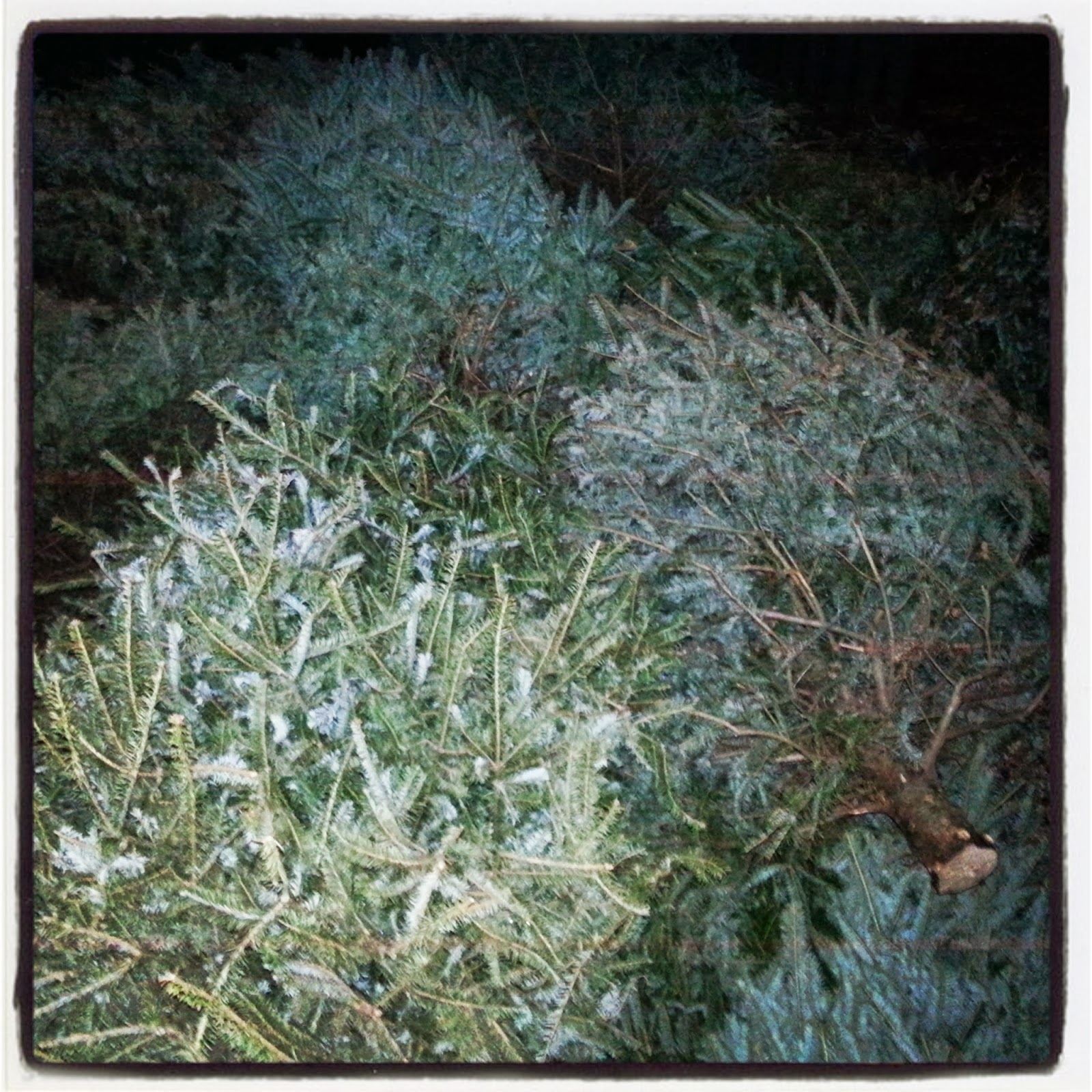 Disposing Of Christmas Trees: How Can I Responsibly Dispose Of My Christmas Tree?