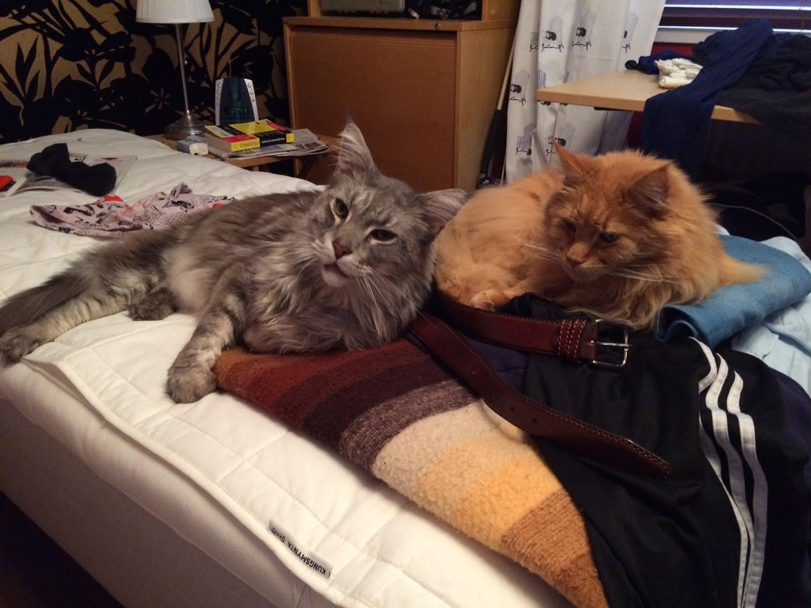 Sängkompisar