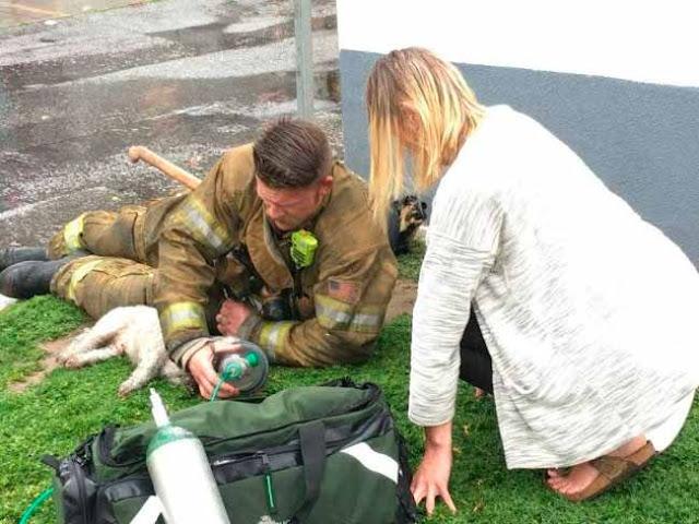 O cão foi levado rapidamente a uma clínica veterinária – Reprodução