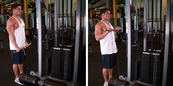 Reverse Cable Curls