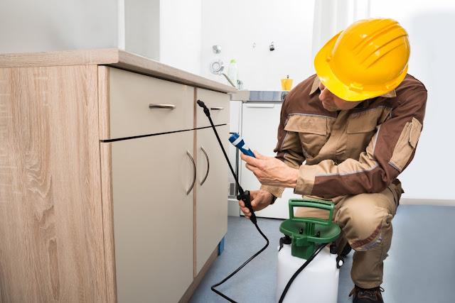 Hire Professional Pest Control Service