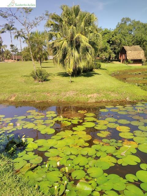 Lago e vitórias-régias no Jardim Botânico de Timbó