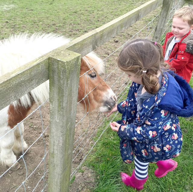 feeding pony at Whitehouse Farm Morperth