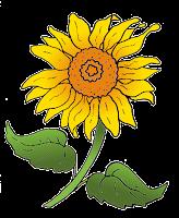 Sonnenblume, kolorierte Kreul-Vorlage
