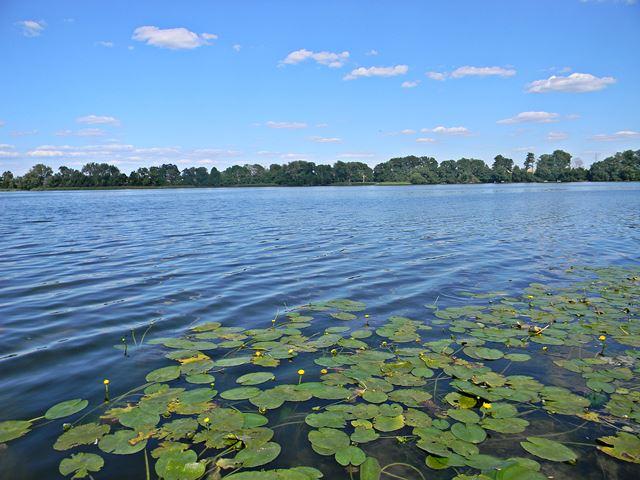 rośliny wodne, las, woda, jezioro, Pszczew