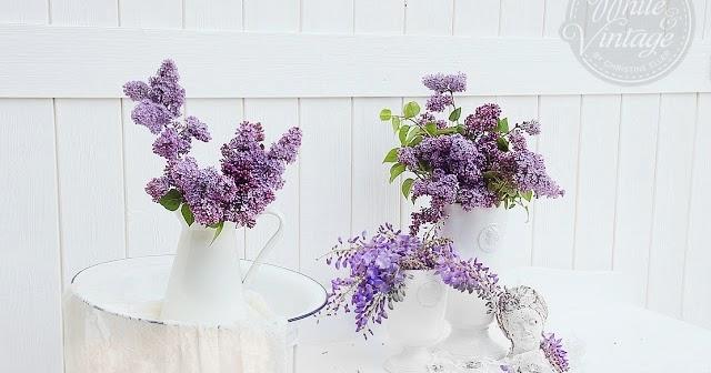 flieder f r balkon flieder flowerfest pink top qualit t. Black Bedroom Furniture Sets. Home Design Ideas