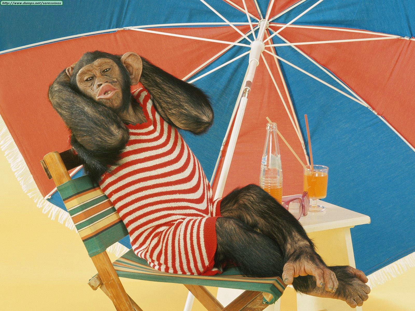 Funny summer animals newbest photos wallpapers 2013 for Immagini divertenti desktop