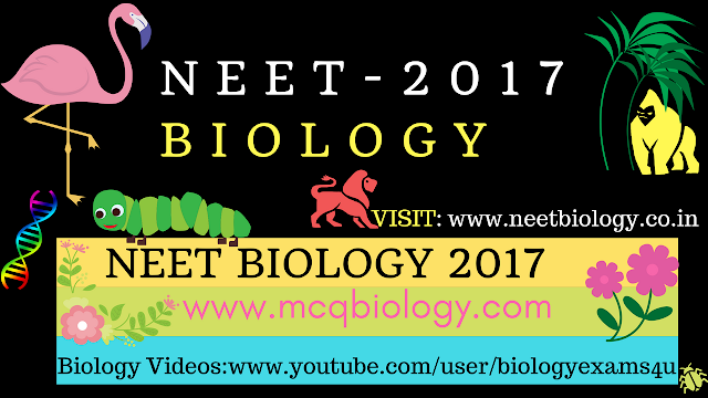 NEET Biology 2017 Questions and Answers