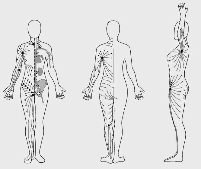 sistemul limfatic trebuie curatat si detoxifiat mereu pentru a se mentine sanatos