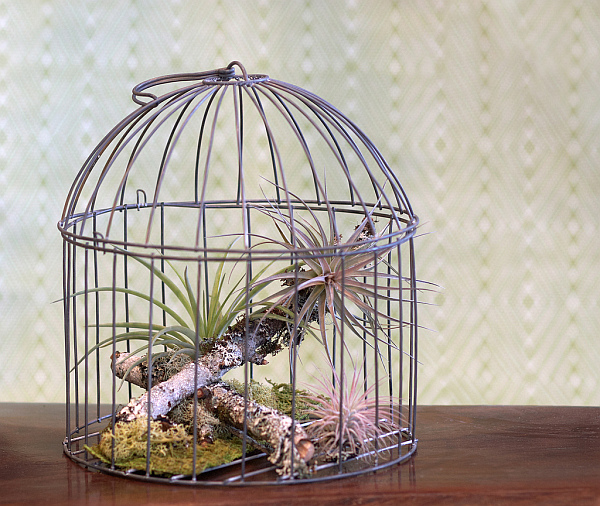 It Could Be Just Bird Cage Painting On The Wall Which Looks Astonishing.  Surely You Will Be Wowing Once Looking At This Bird Cage Home Decor Ideas  Like In ...