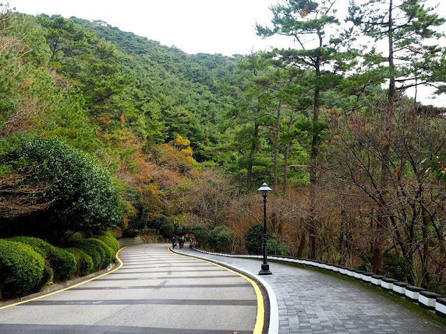 Pathway through autumn coloured trees in Taejongdae Park, Busan, South Korea