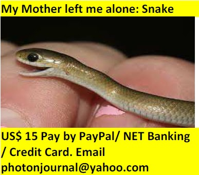 My Mother left me alone: Snake book