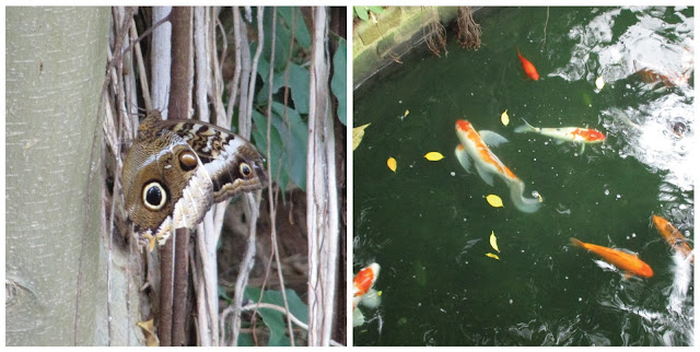 A Day Out At Tropical World Leeds