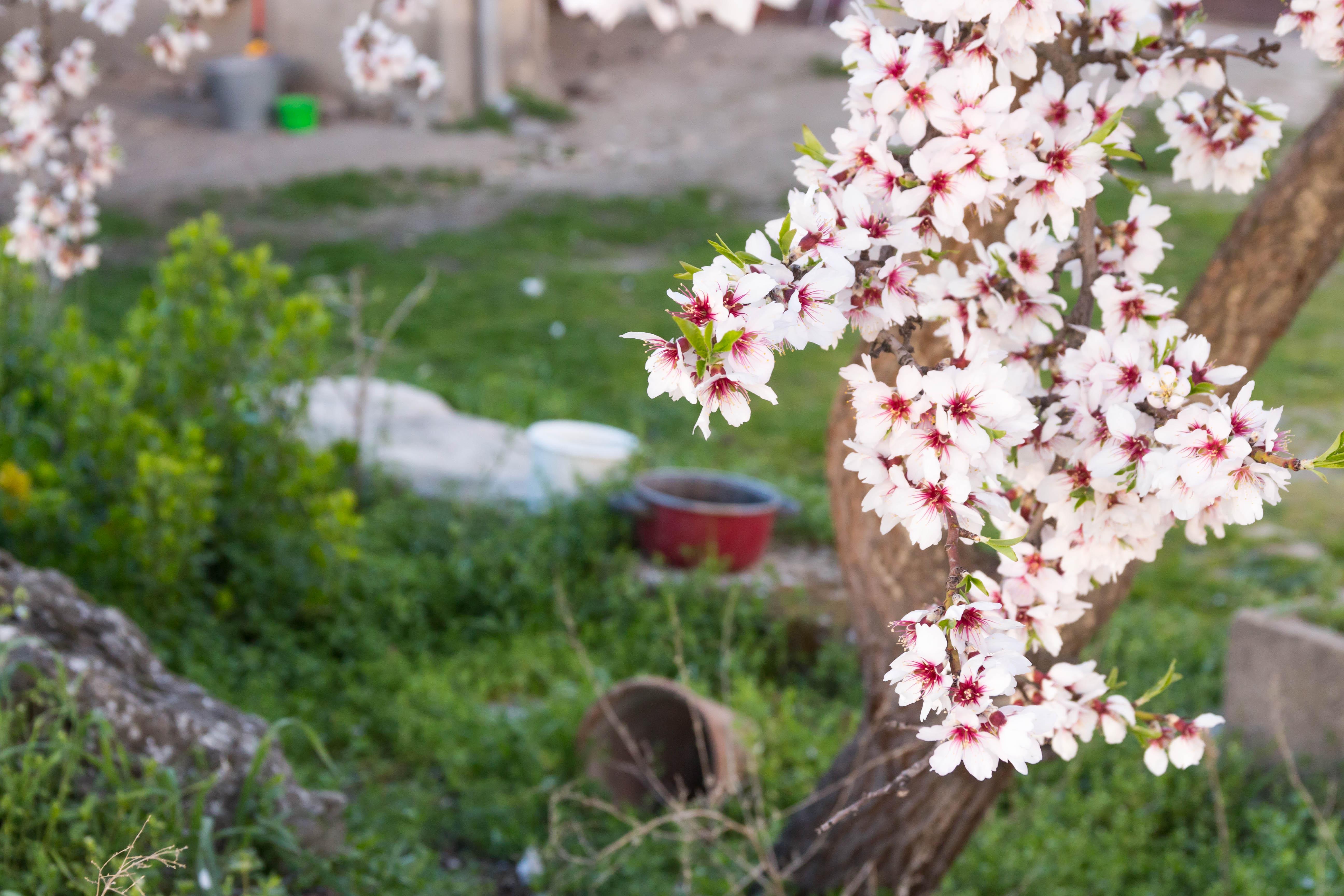 primavera3