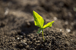 Jak nawozić rośliny doniczkowe latem?