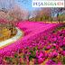 Puisi Pendek Bunga yang indah