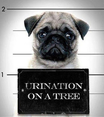 Arrested dog charge