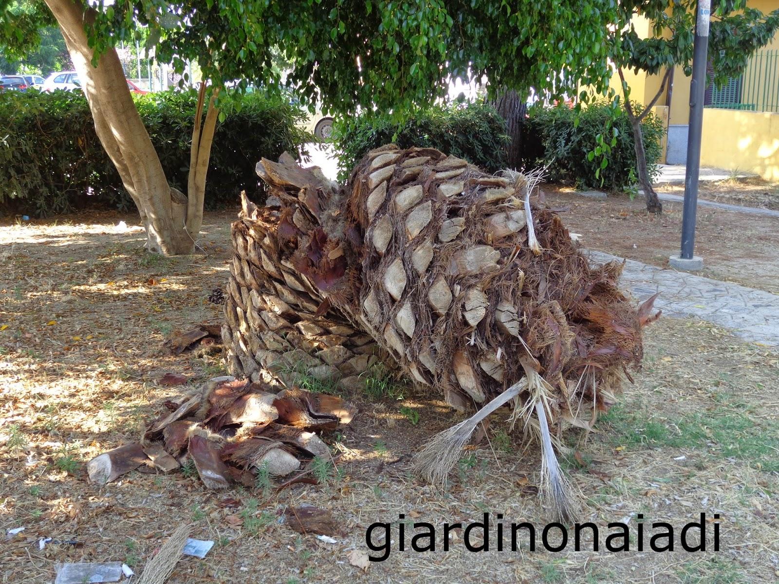 Alberi Nani Da Giardino il giardino delle naiadi: un giardino al vento
