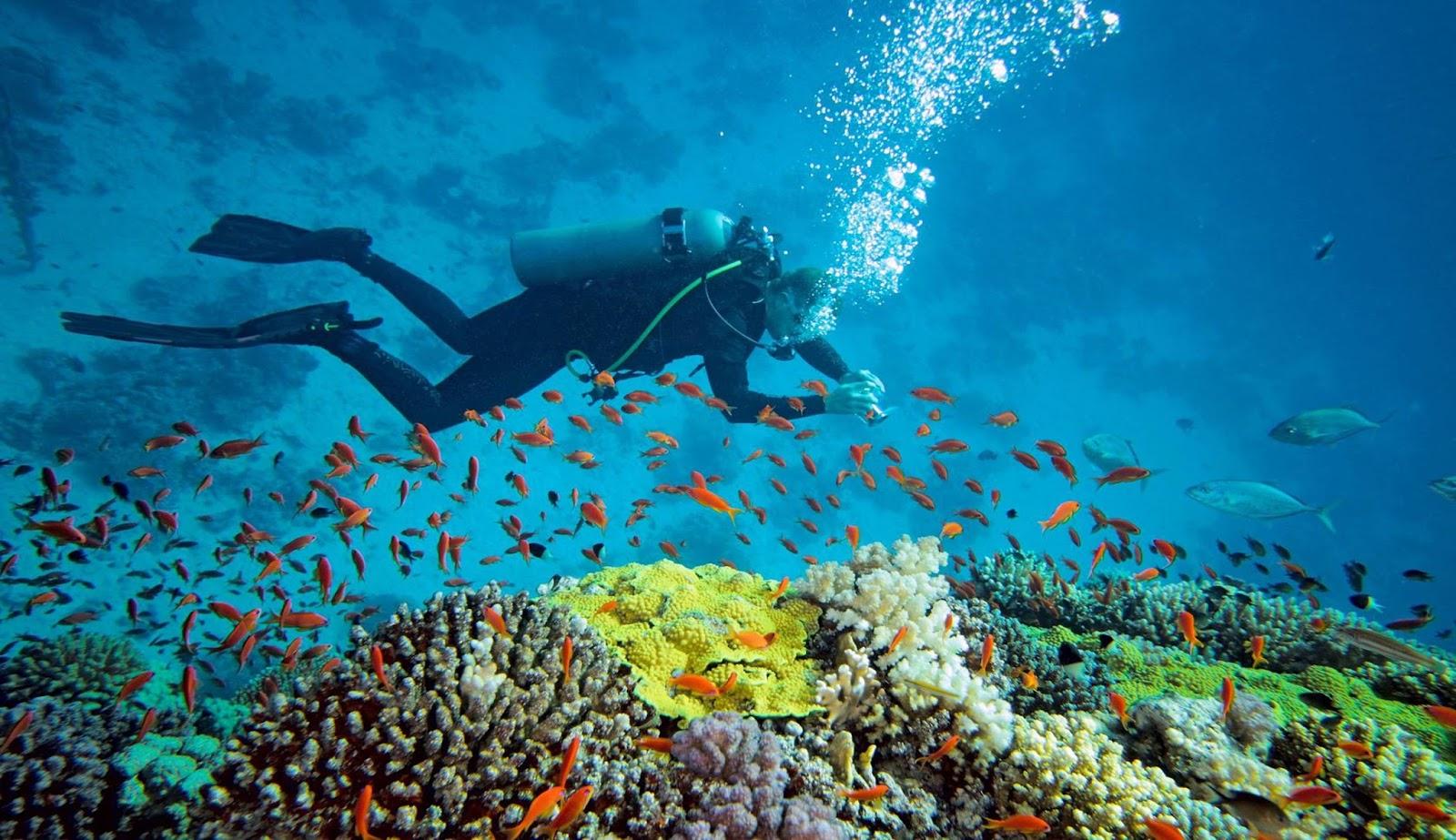 Bagaimana Cara Panduan Lengkap Wisata Ke Kepulauan Derawan