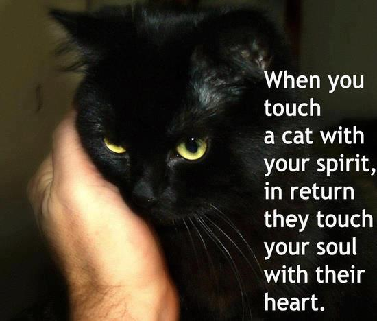 Senior Cat Quotes: PRECIOUS ISLAND: WHEN YOU TOUCH A CAT WITH YOUR SPIRIT