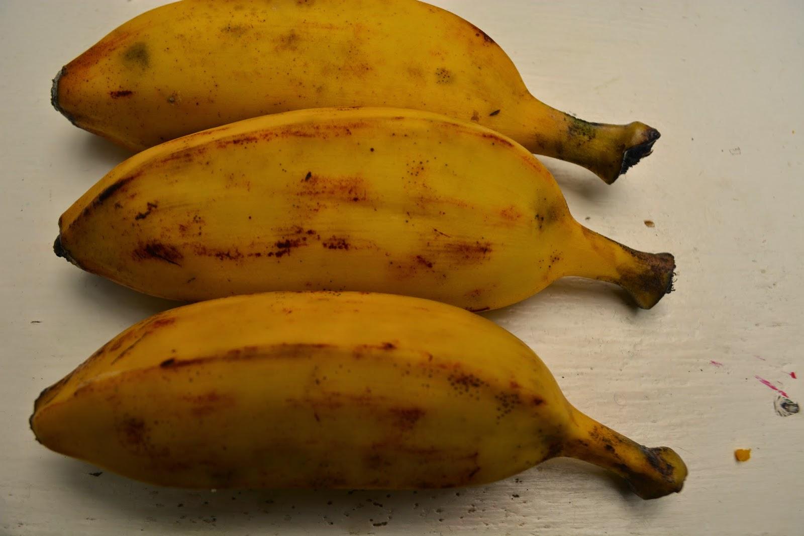 Cosecha bananas orgánicas en zona con heladas