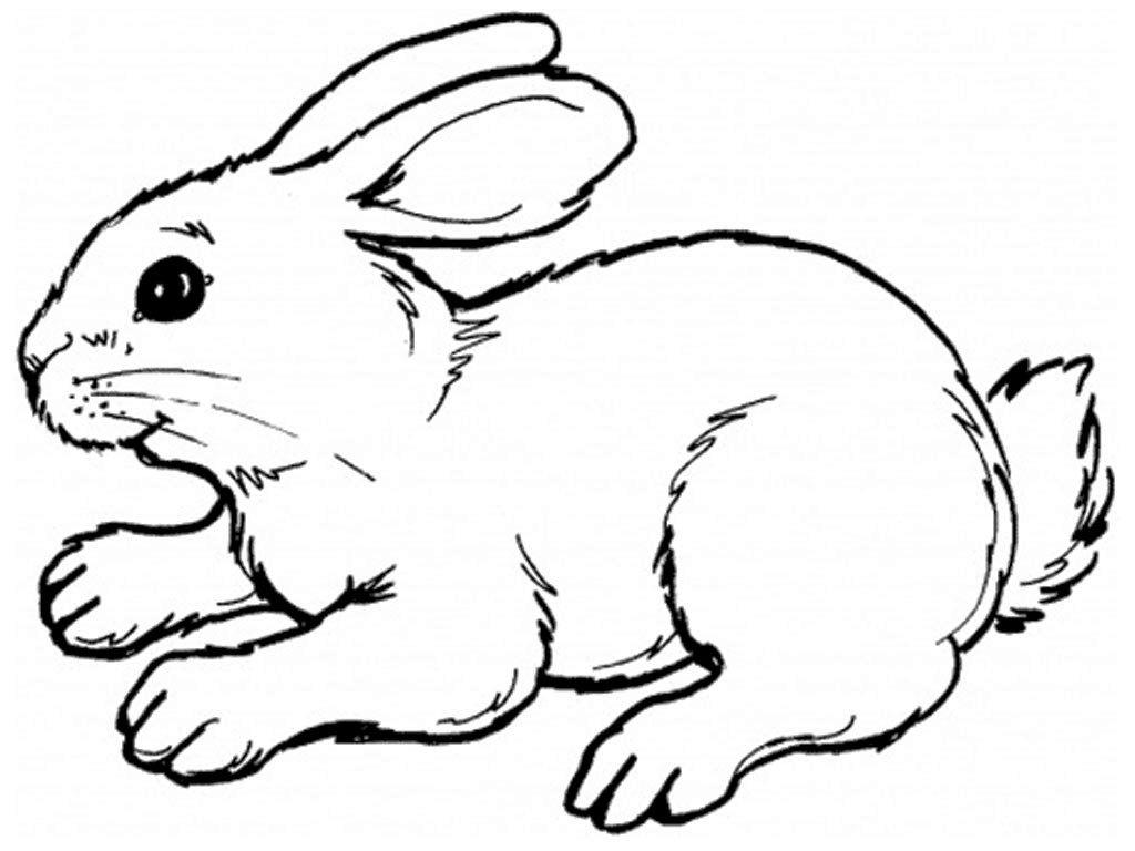 Gambar Sketsa Kelinci Berdiri Hitam Putih Mudah Diwarnai atau Mewarnai untuk Anak TK atau SD Funni standing
