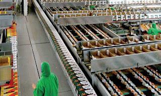 شركة MARAISSA لإنتاج والتعبئة والتغليف : توظيف 100 عامل لمزارع الطماطم بوادي الدهب مع راتب 75 درهم يوميا مع امتيازات السكن و التغطية الصحية و الاجازة السنوية..   MARAISSA%2BRECRUTEMENT