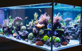 Penting merawat aquarium ikan hias