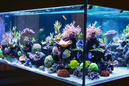 Cara Merawat Akuarium Agar Tetap Bersih dan Ikan Tidak Mati