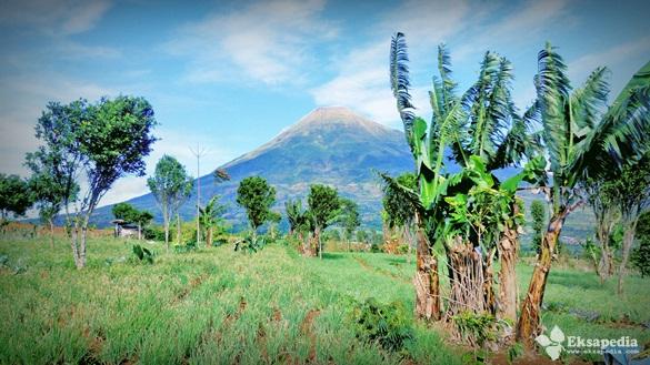 Pemandangan Gunung Sindoro
