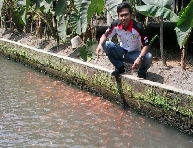 Cara Membuat Kolam Ikan Nila Dari Dasar