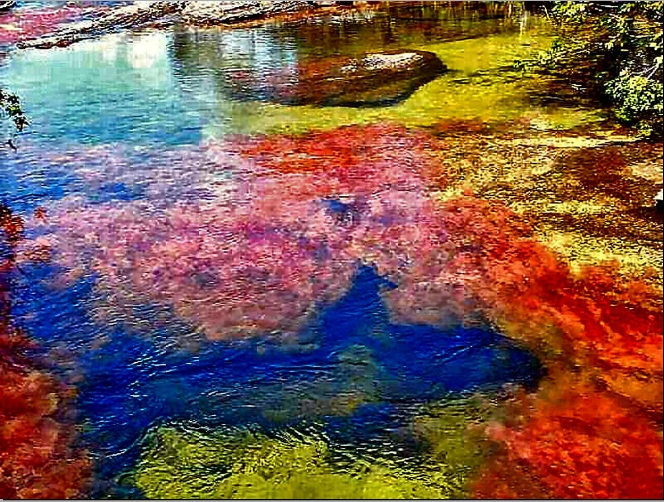 Let S Enjoy The Beauty Cano Cristales The River Of Five