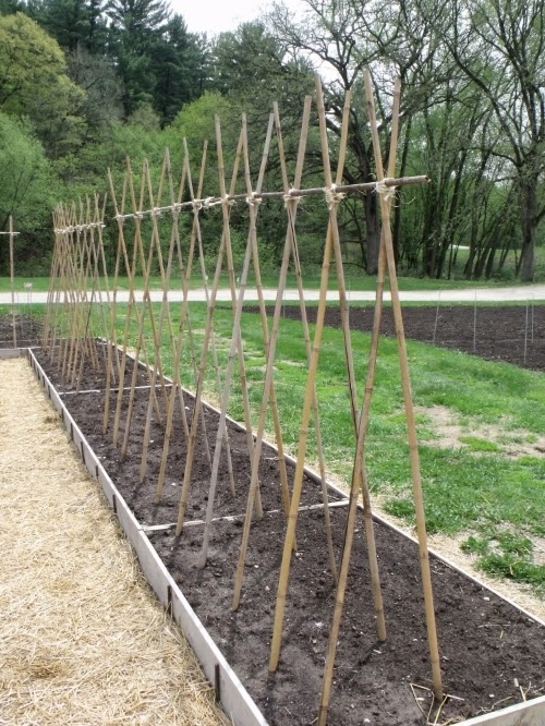 The Best Trellis Designs Organic Gardening My Favorite