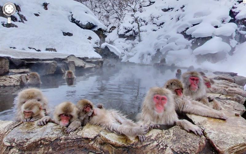 Taman-Monyet-di-Jepang