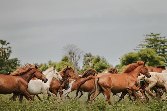 Hanya Butuh Waktu 3 Menit Untuk Diamalkan Pahala Setara Bersedekah 100 Ekor Kuda