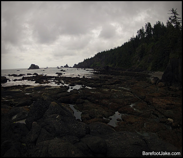rugged olympic coast