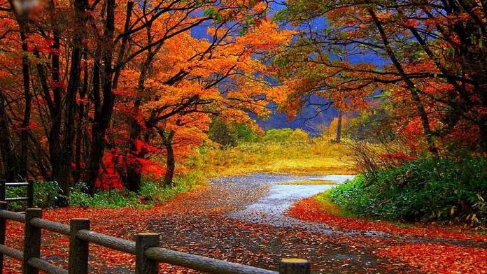 Perché le foglie cambiano colore e cadono in autunno?