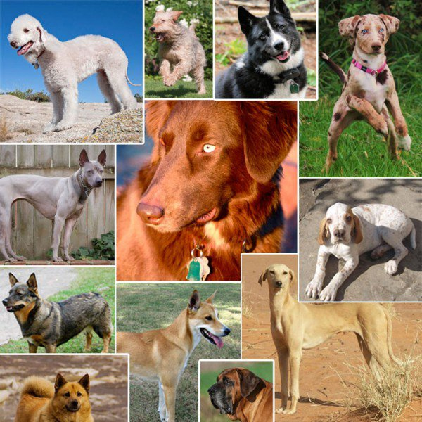 The Coltons Point Times Dog Breeds In Danger Of Extinction Seems