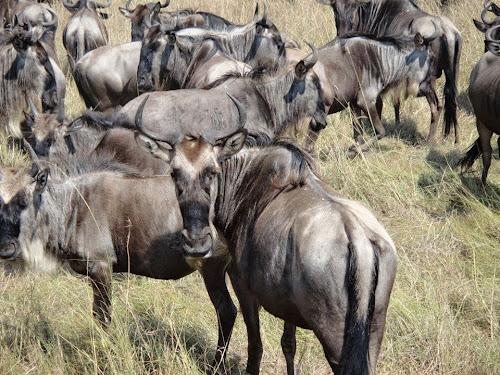 Leftfoot African Safaris Blog