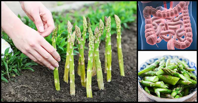 Benefits Of Asparagus On Our Digestive System