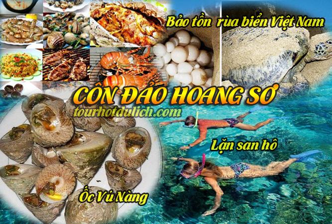tham quan Côn Đảo lặn biển bảo tồn rùa biển