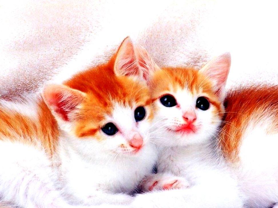 HD K Kitten Wallpapers p For Desktop