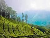 Palampur tea garden