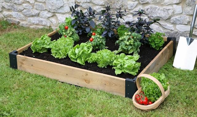 Απλές στιγμές ζωής: Σεπτέμβριος. Φτιάχνω λαχανόκηπο!