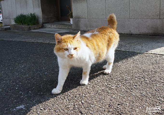 chat a Mojiko, Kita-Kyushu, Fukuoka