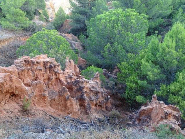 acantilados cala joao arena arens algarve pinar conejos