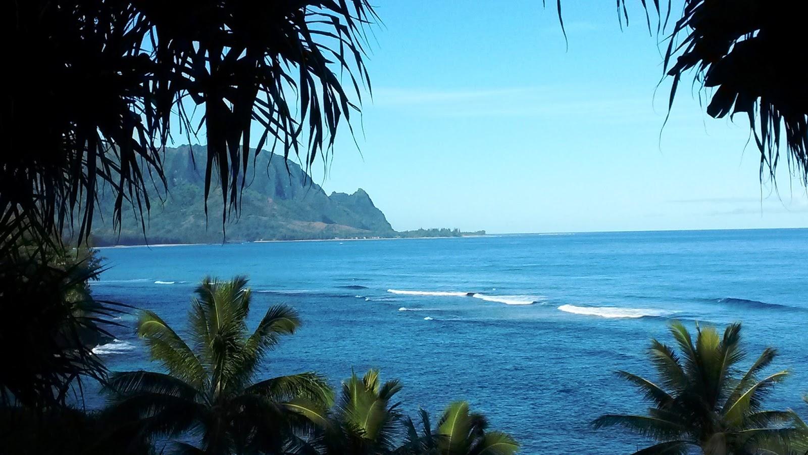 All Hawaii News: Hawaii homeless moving to neighbor