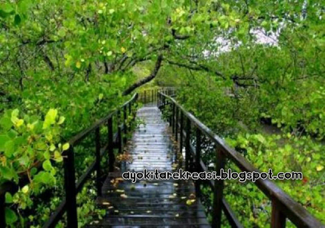 Wisata Ke Hutan Manggrove
